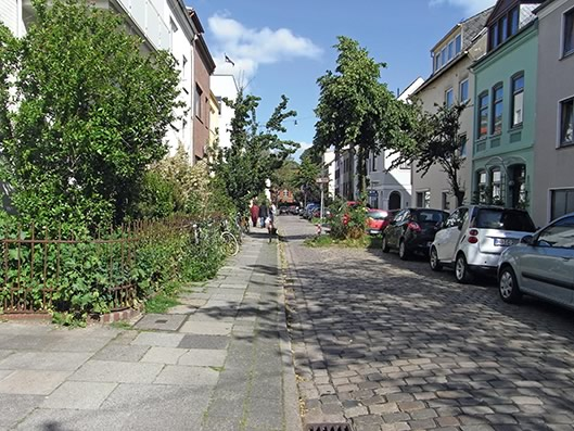 photo 4_7_arbre_dans_la_rue_on_passe_pied_ou_velo